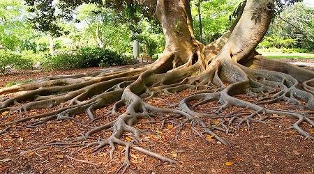 جذور الثقة بالنفس (Confidence Roots)